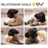 Memes, 🤖, and Afs: RELATIONSHIP GOALS  @Dr Smashlove Me AF because if u a sexy chick who's down for me imma smother yo ass 🐥 ComeHereLilChickee LetMeSpoilYou AinNoPersonalSpaceBih YouMinesNow 😍😂😂😂