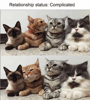 Animals, Bad, and Mood: Relationship status: Complicated 40 Hilarious Animals That Will Instantly Cure Your Bad Mood - JustViral.Net