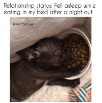 Bae, Memes, and Pizza: Relationship status: Fell asleep while  eating in my bed affer a night out  @frenchiefaux Insert *pizza is bae* here. But seriously @frenchiefaux is my new bae. Pup @frenchiefaux