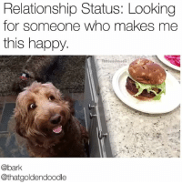 Love, Memes, and Happy: Relationship Status: Looking  for someone who makes me  this happy.  @bark  @thatgoldendoodle Is that what love looks like? I think that's what love looks like. Vid-caption @thatgoldendoodle