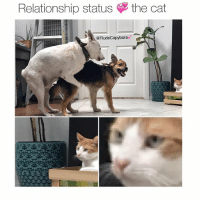 Honestly v relatable. Also that's Mozart my friends dog getting pounced on, so 1 like = 1 support for Craig's poor doggo.: Relationship status  the cat  RudeCapybara Honestly v relatable. Also that's Mozart my friends dog getting pounced on, so 1 like = 1 support for Craig's poor doggo.
