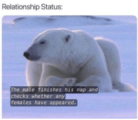 Relationship Status, Nap, and Relationship: Relationship Status:  The male finishes his nap and  checks whether any  females have appeared. Pretty much 😂👀 https://t.co/vNGjZGnRyV