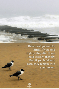 Relationships, Birds, and Forever: Relationships are like  Birds. If you hold  tightly, they die. If you  hold loosely, they fly.  But, if you hold with  care, they remain with  you forever.