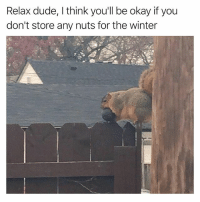 @hilarious.ted has the best animals memes on the planet: Relax dude, I think you'll be okay if you  don't store any nuts for the winter @hilarious.ted has the best animals memes on the planet