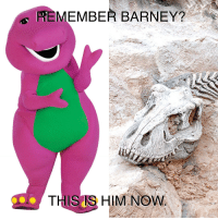 Barney: REMEMBER BARNEY?  THIS IS HIM NOW