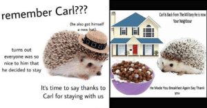 Extremely Stupid Memes Starring Carl The Hedgehog: remember Carl???  Carl Is Back from The Military He is now  Your Neighbour  (he also got himself  a new hat)  turns out  everyone was so  nice to him that  he decided to stay  It's time to say thanks to  Carl for staying with us  He Made You Breakfast Again Say Thank  you Extremely Stupid Memes Starring Carl The Hedgehog