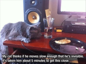 Remember Caturday? Seems like so long ago...But there's no reason why we shouldn't bring some of Caturday magic to today! #cats #catmemes #funnycats #funnymemes #animalmemes: Remember Caturday? Seems like so long ago...But there's no reason why we shouldn't bring some of Caturday magic to today! #cats #catmemes #funnycats #funnymemes #animalmemes