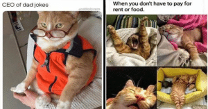 Remember Caturday? Seems like so long ago... Such good times. #cats #funnycats 3catmemes #cutecats #caturday #animalmemes: Remember Caturday? Seems like so long ago... Such good times. #cats #funnycats 3catmemes #cutecats #caturday #animalmemes