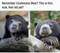 Confession Bear: Remember Confession Bear? This is him  now, feel old yet?