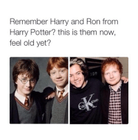 I love harry styles and Ed Sheeran: Remember Harry and Ron from  Harry Potter? this is them now,  feel old yet? I love harry styles and Ed Sheeran