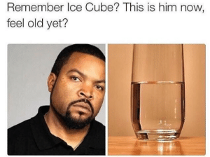 omg-images:  Damn you Global Warming!: Remember Ice Cube? This is him now,  feel old yet? omg-images:  Damn you Global Warming!