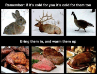 Cold, Funny and Sad, and Them: Remember: if it's cold for you it's cold for them too  Bring them in, and warm them up If you are cold, they are cold....