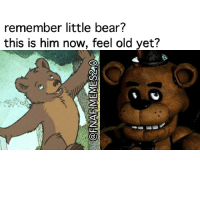 my childhood, ;-;: remember little bear?  this is him now, feel old yet? my childhood, ;-;