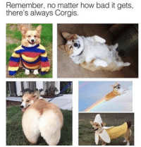 Bad, How, and Remember: Remember, no matter how bad it gets,  there's always Corgis <p>Bless</p>