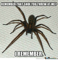 Spiders never forget. Spiders never forgive.: REMEMBER THAT SHOEYOUTHREW ATIME?  I REMEMBER  memecenter com  MemetenlerAR Spiders never forget. Spiders never forgive.
