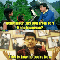 Iski leni to banti hai 😂😂😂: Remember this Dog From Teri  Mehabaaniyan?  Filmy  This is how he Looks Now Iski leni to banti hai 😂😂😂