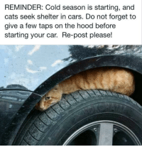 "Cars, Cats, and Dad: REMINDER: Cold season is starting, and  cats seek shelter in cars. Do not forget to  give a few taps on the hood before  starting your car. Re-post please! deanpleasepassthegravy:  forestbeneathme:  keepmywhiskeyneat:  wyvernchild:  lavender-ice:  please.  That is the exact spot my parents found a stray kitten. Nice little addition to the family, but would have been a terrible addition to the pavement had she not been very vocal OTL  No joke, the place where that cat is resting in this picture is called a ""dead cat hole"" it's an automotive term.  Don't believe me, look it up.   This is also where I found a stray cat, she was up in there during a thunderstorm and I begged my dad to let me being her inside and that's the story of how I got my first cat.  Please don't skip over this without reading it and making a mental note. Even if you don't have a car, tell your parents or whoever, and make sure to do this. You think that'll never happen but that's what everyone thought who had this happen and didn't check, and that poor cold cat met with a terribly sad end."