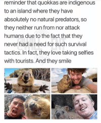 Love, Memes, and Run: reminder that quokkas are indigenous  to an island where they have  absolutely no natural predators, so  they neither run from nor attack  humans due to the fact that they  never had a need for such survival  tactics. In fact, they love taking selfies  with tourists. And they smile I absolutely need to meet a quokka