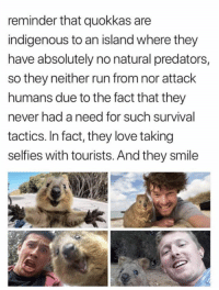 Love, Run, and Pinterest: reminder that quokkas are  indigenous to an island where they  have absolutely no natural predators,  so they neither run from nor attack  humans due to the fact that they  never had a need for such survival  tactics, In fact, they love taking  selfies with tourists. And they smile Pinterest: VIOLET