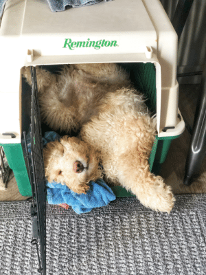 He's far too big for it, but insists on squeezing himself in here anyway.: Remington. He's far too big for it, but insists on squeezing himself in here anyway.
