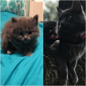 Glo Up and Glo: Rengar's glo up