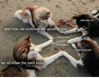 Wholesome doggos: repet after me  and now, we summon the goodest boy  blepestius boof  heckus floofosts  commencing spell  we all know the spell boys Wholesome doggos