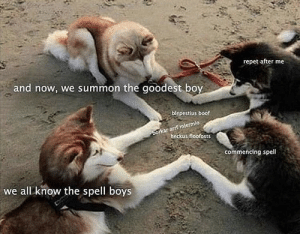 awesomacious:  Wholesome doggos: repet after me  and now, we summon the goodest boy  blepestius boof  heckus floofosts  commencing spell  we all know the spell boys awesomacious:  Wholesome doggos