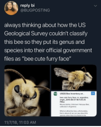 "Cute, Argentina, and Government: reply bi  @BUGPOSTING  always thinking about how the US  Geological Survey couldn't classify  this bee so they put its genus and  species into their official government  files as ""bee cute furry face""  USGS Bee Inventory an..  ce, m, argentina,  angle 2014-08-07-18.11.05 ZS  PMax  Mourecotelles, Unknown Hairyeye Bee,  collected in Argentina  What an attractive bee, unfortunately  that is about all we can say about this  species other than it is found in the  11/7/18, 11:03 AM Bee cute furry face"