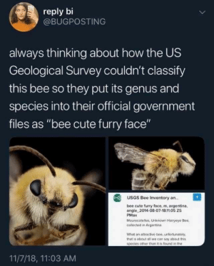 "Those furry little bumble bees are so damn cute! #Animals #Memes #BumbleBees #Cute: reply bi  @BUGPOSTING  always thinking about how the US  Geological Survey couldn't classify  this bee so they put its genus and  species into their official government  files as ""bee cute furry face""  USGS Bee Inventory an..  bee cute furry face, m, argentina.  angle 2014-08-07-18.11.05 ZS  PMax  Mourecotelles, Unknown Hairyeye Bee  collected in Argentina  What an attractive bee, unfortunately.  that is about all we con say about this  species other than it is found in the  11/7/18, 11:03 AM Those furry little bumble bees are so damn cute! #Animals #Memes #BumbleBees #Cute"