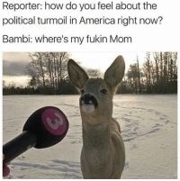 America, Bambi, and Heart: Reporter: how do you feel about the  political turmoil in America right now?  Bambi: where's my fukin Mom My heart still breaks for Bambi