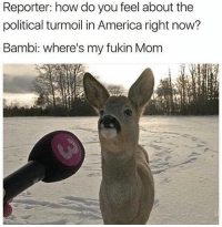 America, Bambi, and Shit: Reporter: how do you feel about the  political turmoil in America right now?  Bambi: where's my fukin Mom Bambi don't take any shit 😂