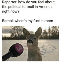 America, Bambi, and Funny: Reporter: how do you feel about  the political turmoil in America  right now?  Bambi: where's my fuckin mom Lmaoo