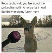 "America, Bambi, and Memes: Reporter: how do you feel about the  political turmoil in America right now?  Bambi: where's my fuckin mom <p>the plight of democracy via /r/memes <a href=""http://ift.tt/2kJ59Nj"">http://ift.tt/2kJ59Nj</a></p>"