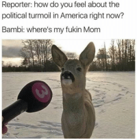 """America, Bambi, and Memes: Reporter: how do you feel about the  political turmoil in America right now?  Bambi: where's my fukin Mom <p>Bambi don&rsquo;t take shit via /r/memes <a href=""""http://ift.tt/2vsY2jL"""">http://ift.tt/2vsY2jL</a></p>"""