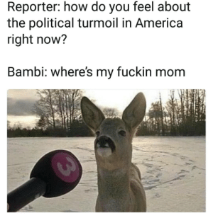 Fuck this…MOM?!???! by Diazepam FOLLOW 4 MORE MEMES.: Reporter: how do you feel about  the political turmoil in America  right now?  Bambi: where's my fuckin mom Fuck this…MOM?!???! by Diazepam FOLLOW 4 MORE MEMES.