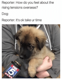 Memes, Time, and Dank Memes: Reporter: How do you feel about the  rising tensions overseas?  Dog:  Reporter: It's ok take ur time  ague @ladbible has the dankest memes on IG