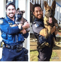 All Lives Matter, Anaconda, and Belgium: Repost from @defend.the.second Dogs have been used by law enforcement agencies for over 100 years. The English used bloodhounds while searching for Jack the Ripper in 1888, and during that time they allowed canines to accompany bobbies (police) on patrol. In 1899, in Ghent, Belgium, police started formally training dogs for police work. This enhanced the popularity of using dogs for police work. By 1910, Germany had police dogs in over 600 of their largest cities. In 1938, South London introduced two specially trained Labrador Retrievers to the Metropolitan Police Force to accompany bobbies on patrol. In the 1970's the use of dogs in law enforcement took a foothold in the United States. Now they are considered a part of the police force, and in many departments they even have their own badges. From the hundreds of dog breeds, there are some that are widely known for their presence in law enforcement. The most widely trained dog for regular patrol work is the German Shepherd. Other exemplary breeds include-but are not limited to-the Labrador Retriever, Belgian Malinois, and the Dutch Shepherd. Certain breeds have been used for special purposes, such as detecting illegal drugs or explosives, and tracking fugitives or missing persons. police cop cops thinblueline lawenforcement policelivesmatter supportourtroops BlueLivesMatter AllLivesMatter brotherinblue bluefamily tbl thinbluelinefamily sheriff policeofficer backtheblue