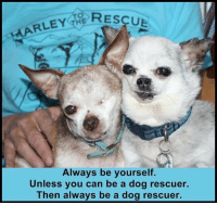 #HarleysDreamKeeper: RESCUE  ARLEY THE  Always be yourself.  Unless you can be a dog rescuer.  Then always be a dog rescuer. #HarleysDreamKeeper