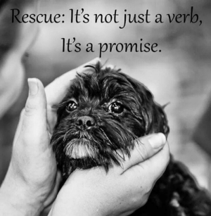 """Alive, Bad, and Beautiful: Rescue: It's not just a verb,  1t's a promise. """"My foster dog stinks to high heaven. I don't know for sure what breed he is. His eyes are blank and hard. He won't let me pet him and growls when I reach for him. He has ragged scars and crusty sores on his skin. His nails are long and his teeth which he showed me are stained.   I sigh.   I drove two hours for this. I carefully maneuver him so that I can stuff him in the crate. Then I heft the crate and put it in the car. I am going home with my new foster dog.   At home I leave him in the crate till all the other dogs are in the yard. I get him out of the crate and ask him if he wants 'outside.' As I lead him to the door he hikes his leg on the wall and shows me his stained teeth again.   When we come in he goes to the crate because that's the only safe place he sees. I offer him food but he won't eat it if I look at him, so I turn my back. When I come back the food is gone. I ask again about 'outside.' When we come back I pat him before I let him in the crate, he jerks away and runs into the crate to show me his teeth.   The next day I decide I can't stand the stink any longer.  I lead him into the bath with cheese in my hand. His fear of me is not quite overcome by his wish for the cheese. And well he should fear me, for I will give him a bath.  After an attempt or two to bail out he is defeated and stands there. I have bathed four legged bath squirters for more dog years than he has been alive. His only defense was a show of his stained teeth that did not hold up to a face full of water.   As I wash him it is almost as if I wash not only the stink and dirt away but also some of his hardness. His eyes look full of sadness now. And he looks completely pitiful as only a soap covered dog can. I tell him that he will feel better when he is cleaned. After the soap the towels are not too bad so he lets me rub him dry. I take him outside. He runs for joy. The joy of not being in the tub and the j"""