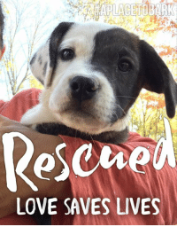 """Love, Memes, and Help: Rescue  LOVE SAVES LIVES New Arrivals this week at """"A Place To Bark"""" Many Thanks to our foster homes that cared for our rescues, till we had space💕 Foster homes, Save Lives!!! Rescues & Humane Societies Always, Always, Always, Need Foster Homes! Please Become A Foster Home & Help Save Lives Today!  #rescuedpuppy #everylifematters #aplacetobark"""