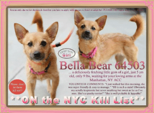 "Being Alone, Dogs, and Family: Rescue-only due to her shyness & therefore you have to apply with rescues to foster or adopt her. PLEASE, DO! Apply now ohme  SWEET BABY  Girl  Bella Bear 64503  a deliciously fetching little gem of a girl, just 5 yrs  old, only 9 lbs, waiting for your loving arms at the  Manhattan, NY ACC  ...  Please, don't  VOLUNTEER COMMENTS: ""I just walked her this morning, she  was super friendly & casy to manage."" ""BB is such a cutie! Obviously  my scruffy kryptonite but never anything but sweet as far as I've  seen. She's a spunky terrier!"" ""She is well pickable & lappable!""  let them  kill me!!!  ON the NYC KiN Lisc ** TO Be Killed 7/13/19 In NYC **  Bella Bear 64503 ... a deliciously fetching little gem of a girl, just 5 yrs old, only 9 lbs, waiting for your loving arms at the Manhattan, NY ACC. VOLUNTEER COMMENTS: ""I just walked her this morning, she was super friendly & easy to manage."" ""BB is such a cutie! Obviously my scruffy kryptonite but never anything but sweet as far as I've seen. She's a spunky terrier!"" ""She is well pickable & lappable!"" <3 FOR a New Family to Know: Bella Bear is a shy little girl who needs time to warm. She likes to play with squeaky or soft plush toys & LOVES carrot cake. 🎂Yum!!! She is well-behaved when left alone at home & trained to use wee wee pads. She is afraid of kids & would do best in an adult-only new home as the only pup being spoiled rotten forevermore. Relaxed & waggy tailed during intake, this good little girl is rescue-only due to her shyness & therefore you have to apply with rescues to foster or adopt her. PLEASE, DO!   Bella Bear & friends in Small Doggie Playgroup: https://youtu.be/j0uyCsErnHM  ✔Pledge✔Tag✔Share✔FOSTER✔ADOPT✔Save a life!  Bella Bear 64503 Small Mixed Breed Sex female Age 5 yrs (approx.) - 9 lbs  My health has been checked.  My vaccinations are up to date. My worming is up to date.  I have been micro-chipped.  I am waiting for you at the Manhattan, NY ACC. Please, Please, Please, save me!  ******************************************** *** TO FOSTER OR ADOPT ***   To FOSTER or ADOPT, To SAVE her LIFE, SPEAK UP NOW & apply with rescues OR message Must Love Dogs - Saving NYC Dogs IMMEDIATELY!!!! HURRY, she IS OUT OF TIME! :(  The general rule is to foster you have to be within 4 hours of the NYC ACC approved New Hope partner rescues you are applying with and to adopt you will have to be in the general NE US area; NY, NJ, CT, PA, DC, MD, DE, NH, RI, MA, VT & ME (some rescues will transport to VA).  ==========================="