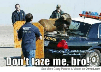 RESCUE  PATROL  Cop Humor  n Facebook  Don't taze me, bro!  See More Crazy Pictures & Videos on Owned.com On the trunk of a squad car naked? You're going into custody (SFW)