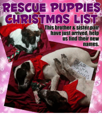 Rescue Puppies Christmas List This Brother Sister Pair Have Just