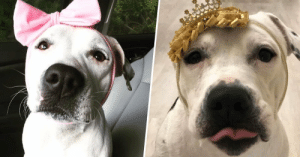 Rescued Bait Dog Turned Therapy Dog Is 'The New Disney Princess'  link to full story:   Rescued Bait Dog Turned Therapy Dog Is 'The New Disney Princess'  link to full story
