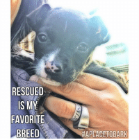 "Memes, Veterinarian, and Pup: RESCUED  IS MY  FAVORITE  BREED  HAPLACETOBARK Donations are needed to help ""A Place To Bark"" meet a matching donation, up to $1,500 today, for the 20 dogs pulled from Animal Control today. Links are in the comments below & you are welcome to donate directly to our veterinarians:)  Our ability to pull large numbers depends on the ongoing donations needed for veterinary care, food & operational costs.  I was trying to do a live video with this cute pup, but we have a very weak connection going thru the mountains.   So I'll just share her darling photo until we have better reception. Feel free to post a name for this sweet girl. A few more hours & we will be back at our shelter.   Thank You for caring, sharing, commenting & supporting our cause❤️️  #everylifematters #aplacetobark #togetherwesavelives"
