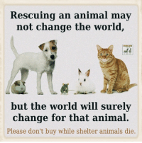 Memes And Change The World Rescuing An Animal May Not EVOLVEI But Will Surely For That Please Dont Buy