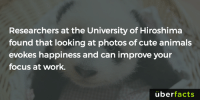 😍😍😍: Researchers at the University of Hiroshima  found that looking at photos of cute animals  evokes happiness and can improve your  focus at work.  uber  facts 😍😍😍