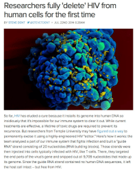 "Drugs, Tumblr, and Cbs: Researchers fully 'delete' HIV from  human cells for the first time  BY STEVE DENT  @STEVETDENT JUL 22ND 2014 6:28AM  So far, HIV has eluded a cure because it installs its genome into human DNA so  insidiously that it's impossible for our immune system to clear it out. While current  treatments are effective, a lifetime of toxic drugs are required to prevent its  recurrence. But researchers from Temple University may have figured out a way to  permanently excise it using a highly-engineered HIV ""editor."" Here's how it works: the  team analyzed a part of our immune system that fights infection and built a ""guide  RNA"" strand consisting of 20 nucleotides (RNA building blocks). Those strands were  then injected into cells typically infected with HIV, like T-cells. There, they targeted  the end parts of the virus's gene and snipped out all 9,709 nucleotides that made up  its genome. Since the guide RNA strand contained no human DNA sequences, it left  the host cell intact- but free from HIV lanque-hates-terfs:  allthingshyper:  gehayi:  hiddlesbatchlove:  forever-falling-forward:  platredeparis:  bnycolew:  mannysiege:  Progress  What  Imma just let this sit here  MOTHA FUCKIN SCIENCE  sources: Engagdget DailyTech CBS  They turned RNA into an anti-virus program. That is amazing.  Let me restate this in case it didn't sink in the first time Researchers physically DELETED ALL TRACES of the HIV virus from a human cell. ALL OF IT. IF YOU ARE NOT EXCITED ABOUT THAT I DON'T THINK YOU KNOW WHAT HIV IS   YEAAAAAAHHHHH!"