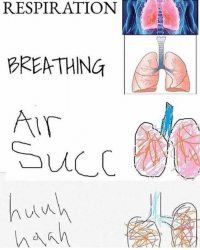 Succ and Respiration: RESPIRATION  BRENTHING  Succ  huwh
