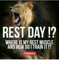 gainseveryday restmuscle traininsaneorremainthesame choiceisyours: REST DAY  WHERE IS MY REST MUSCLE  AND HOW DOITRAIN IT  GYMAHOLIC gainseveryday restmuscle traininsaneorremainthesame choiceisyours